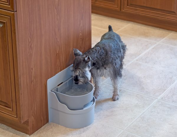 Dog drinking from Perpetual Well Automatic Water Bowl