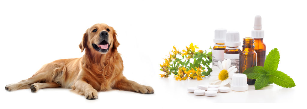 Perpetual Well Vitamins and your Dog 1024x366 Vitamins, Supplements, Your Dog, And You automatic dog waterer    Image of Vitamins and your Dog 1024x366