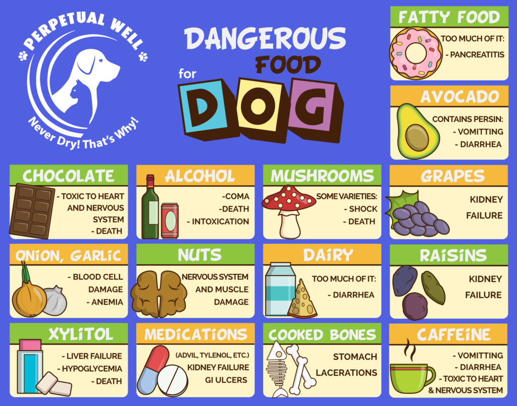 The Top 5 Most Dangerous Foods For Your Dog
