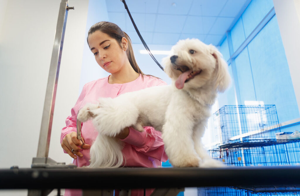 Tips for Keeping Your Dog Calm at the Groomer